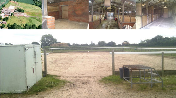 Merseyhorse Horses For Sale Horses For Loan Ponies